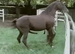 Awesome horses are screwing in doggy style
