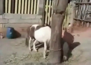 Young pervert is enjoying a fuck with a pony
